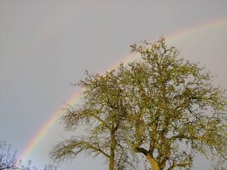 Regenbogen und Baum