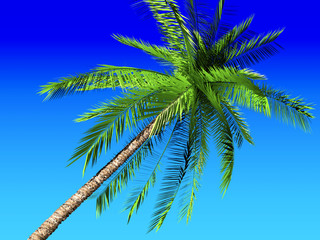Palm and blue sky