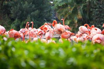 Flamingo& 39 s in planten in Florida, VS