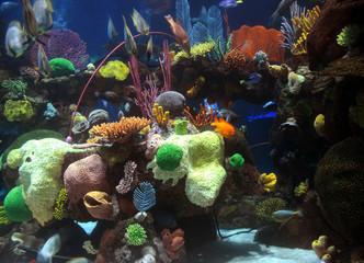 Keuken foto achterwand Koraalriffen Coral reef