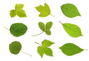 Collection fruit leaves