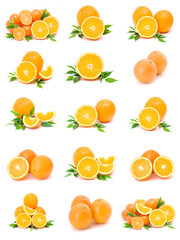 collection of citrus on a white background