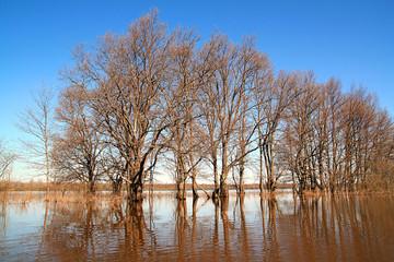 flood in wood.