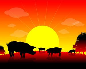 farm animals, Herd of pigs on nature