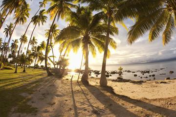 Palm trees at sunrise, Fiji