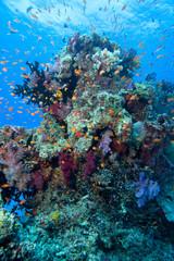 Coral, Fiji