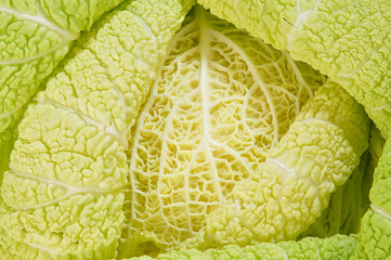 Cabbage as background of bends