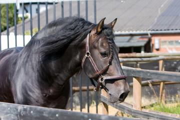 Pferd in Führanlage