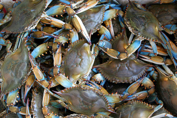 Blue Shell Crabs