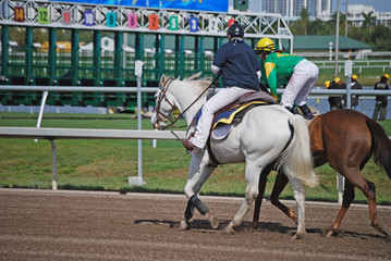 Racehorse Being Lead to the Starting Gate
