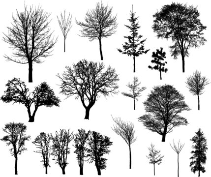 Beautiful winter tree silhouettes, highly detailed.