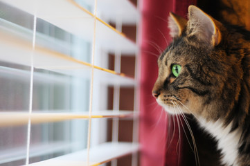 Cat Looking out window at day