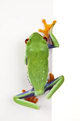 Frame frog