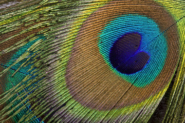 Beautiful Peacock eye background