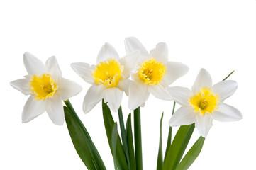 Photo sur Aluminium Beautiful springtime narcissus