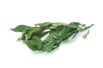 bay laurel leaves isolated on a white background