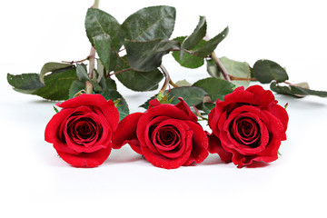 Three red roses with leaves