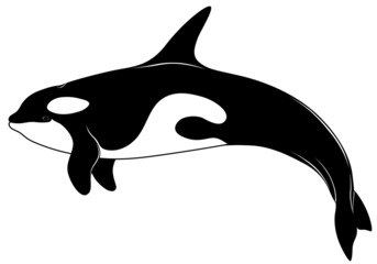 Killer whale, tattoo