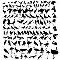collection of bird