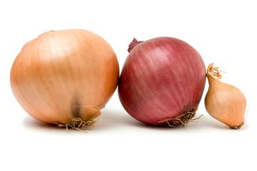 Onion Line Up