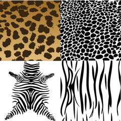 Animals skin. Vector Illustration