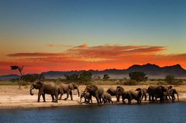 Herd of elephants in african savanna Wall mural