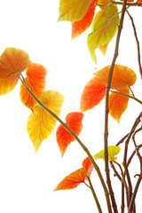 shining autumn leaves_2