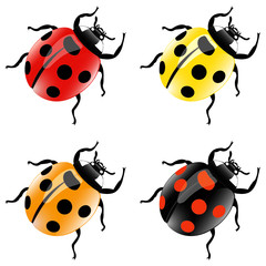 Set of four color ladybirds
