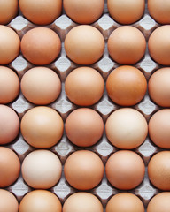 eggs in a protective container
