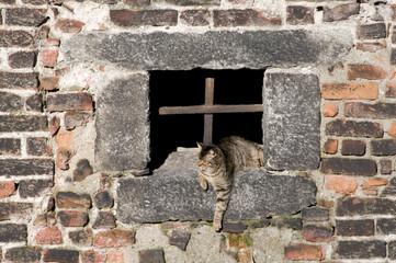 Gatto su finestra antica