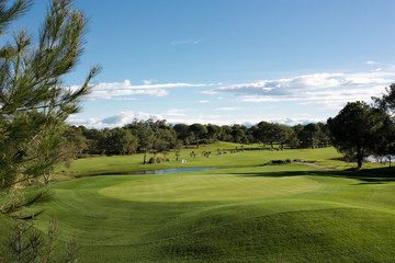 Beautiful golf park with blue sky and shadows