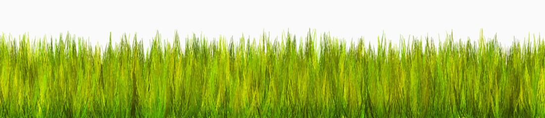 erba 3d - grass