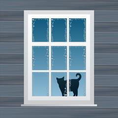 Cat near windows