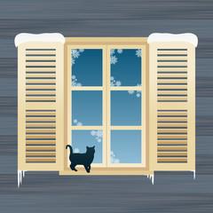 Cat near windows in winter