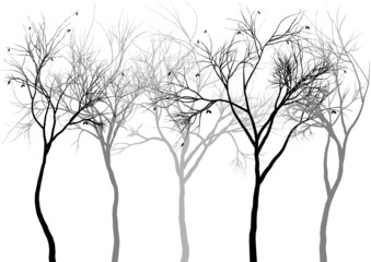 foggy forest, vector
