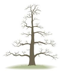 tree of life - genealogy