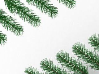 pine branches with empty space