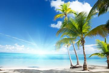 Fototapete - Caribbean sea and coconut palms