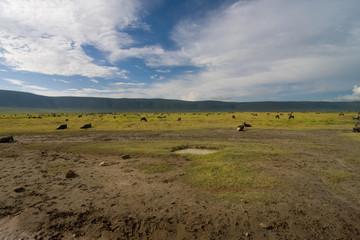Erbivori al Ngorongoro