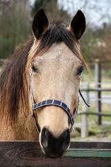 Pferde - Portrait