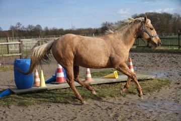 Pferd im Galopp auf Trailplatz