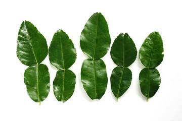 こぶ みかん の 葉