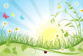 Photo sur Aluminium Coccinelles Spring floral card