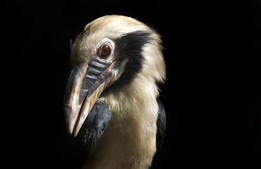 Portrait of an exotic bird on a black background
