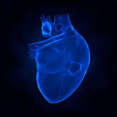 Human heart x-ray view