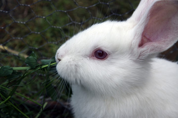 Adorable white rabbit in green grass