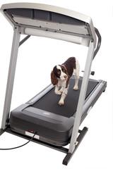 Dog walking on treadmill