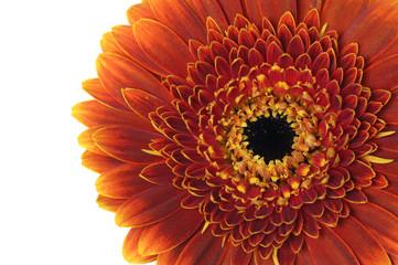 Half of sunflower close up