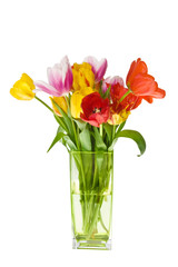 Bunch of coloured fresh tulips on white background