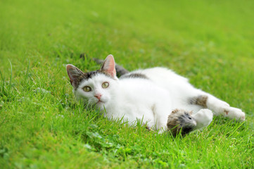 Katze 11.1